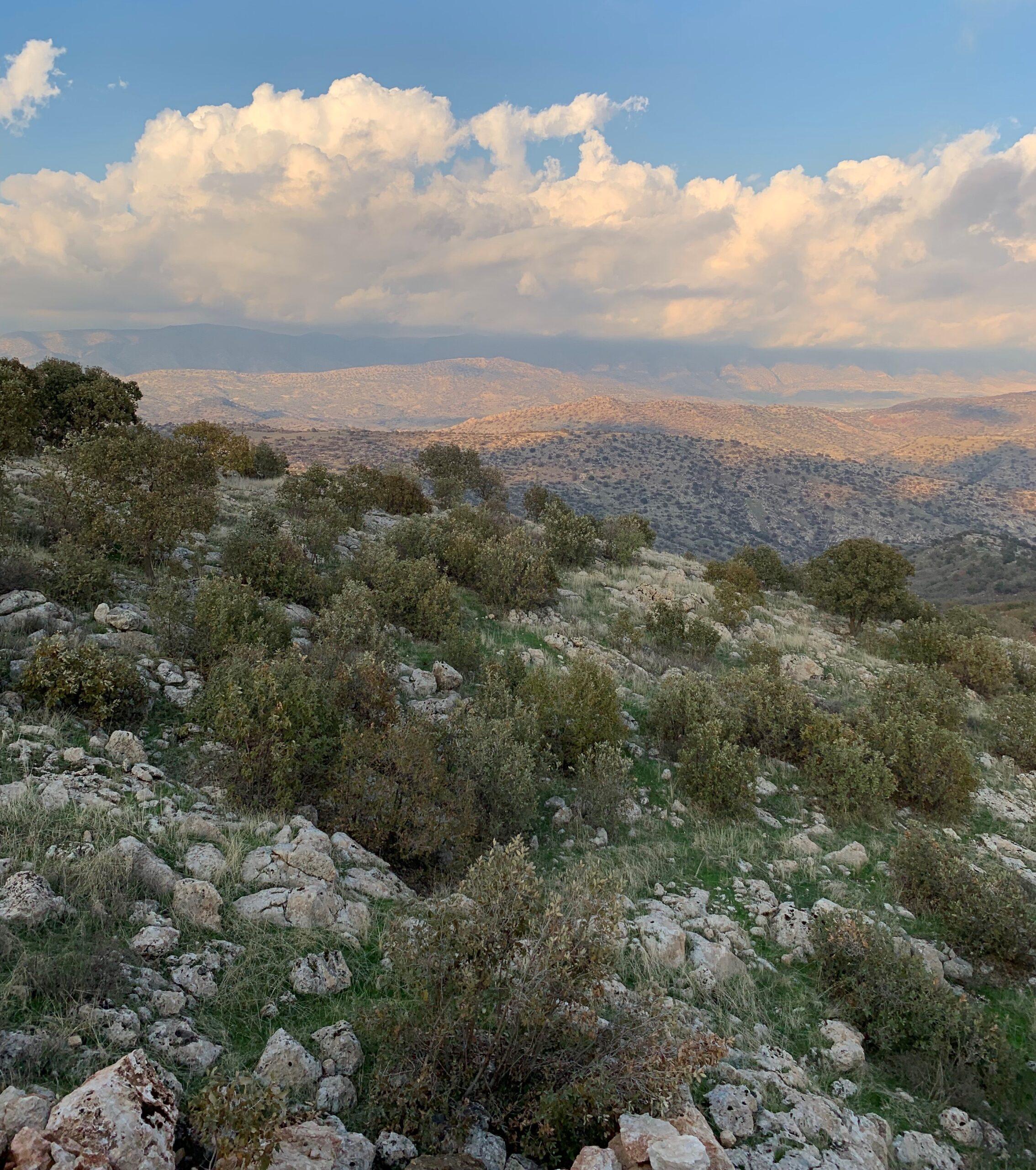 Shaikan Landscape